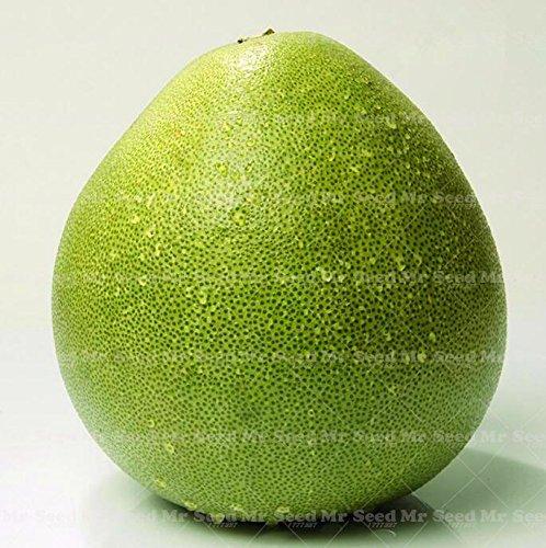 20PCS Thai graines vert pomelo graines de Pamplemousse graines de fruits rares plantes de santé organiques pour la plantation de jardin à domicile