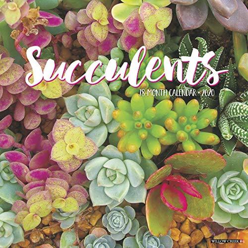 Succulents 2020 Wall Calendar