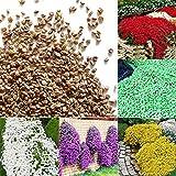 xinzhi 100Pcs Semillas de pepino de roca Semillas de...