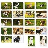 Puppy Dog cartoline–Set di 40cartoline–Bulk–cute design per tutte le o...