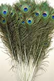 25 Pcs Natural Peacock Feathers 30'-35'