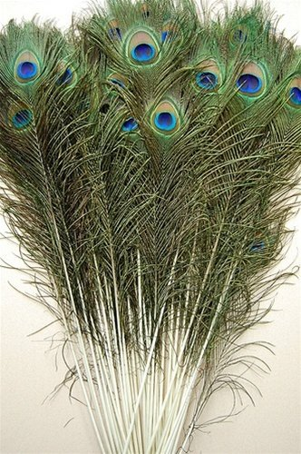 "25 Pcs Natural Peacock Feathers 30""-35"""