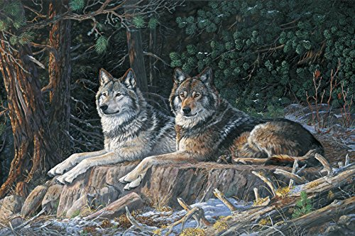 """Resting Point Wolf Digitally Printed Panel by Terry Dougherty from Northcott 100% Cotton Quilt Fabric DP21938 94 28"""" x 42"""""""