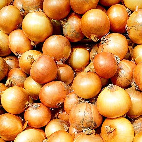 北海道 玉ねぎ 10kg 玉葱(たまねぎ) 北海道産 L大サイズ 10kg わけあり