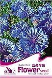 Semi di fiori di fiordaliso perenne seme confezione originale 40 grani / bag