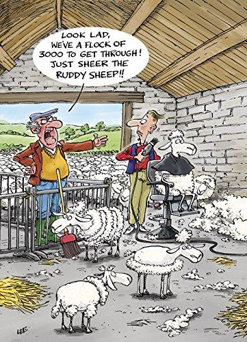 Sheep Shearing - Humour Greetings Card 10568 (Happy Birthday)