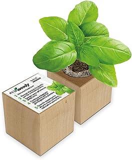 Eco-Woody | Regalo ecologico e sostenibile | Cubo di legno magnetico con semi di Basilico | Kit per la coltivazione facile...