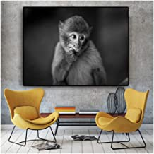 Best funny pictures of monkeys eating bananas Reviews