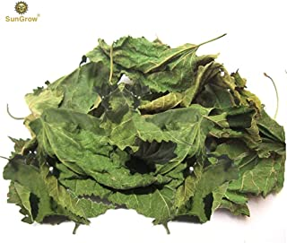SunGrow Betta Leaves, Medicine and Water Supplement, Improves Fish Health and Breeding