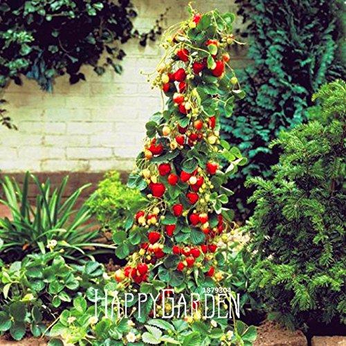 Vente géante rouge d'escalade Strawberry Seeds Graines de fruits pour la maison et jardin bricolage semences rares pour bonsaï - 10pcs / Pack, # XSTJII