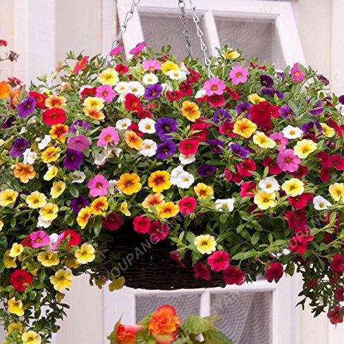 200PCS couleurs mélangées Petunia Graines de fleurs Graines Fleurs vivaces pour jardin Bonsai Pot Plantation Belle Décoration Jaune