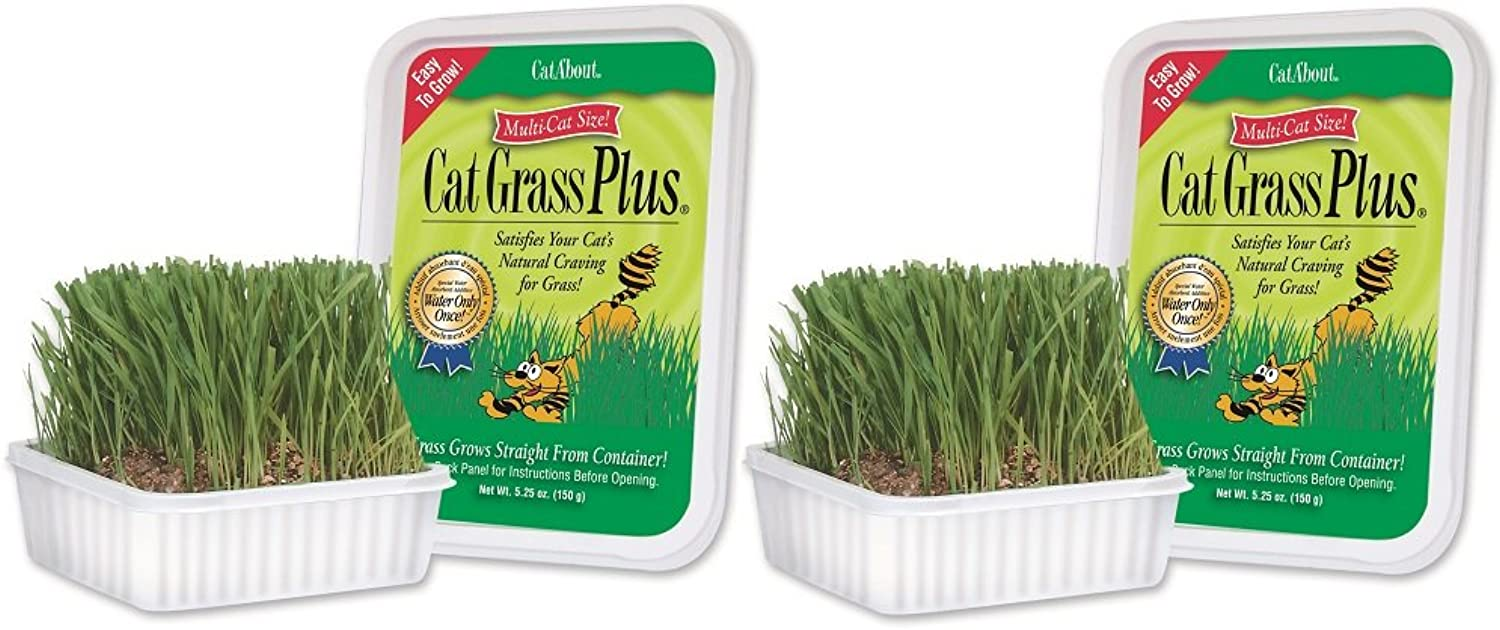 Miracle Care  CatAbout Easy to Grow Cat Grass Plus Container, MultiCat Size  150 Grams (2 Pack)