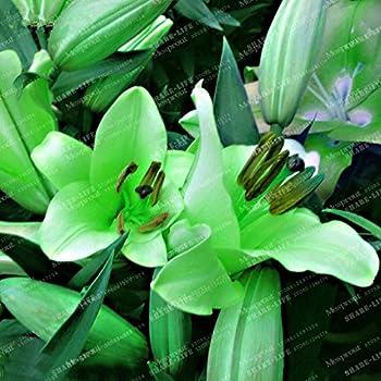 100 PCS Seeds Lilium Flowers Plants Faint Scent Bonsai Home Garden Free Shipping
