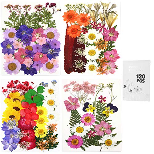 120pcsReal Dried Pressed Flowers Leaves Petals for Crafts, Colorful Pressed Flowers Daisies for Candle Jewelry Nail Pendant Crafts Making, Dried Flowers for Resin Art Floral Decors