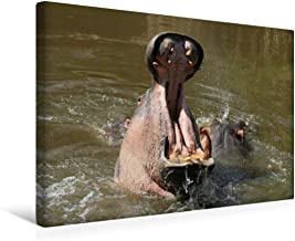 Premium - Lienzo de tela (45 x 30 cm, horizontal, diseño de hipopótamo, imagen sobre bastidor, lienzo auténtico) por hora de ser rápido. CALVENDO Animales Calvendo