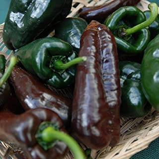 David`s Garden Seeds Pepper Hot Mulato Isleno SL9420 (Green) 50 Non-GMO. Heirloom Seeds