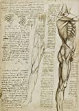 World of Art Global Vintage Anatomie Leonardo da Vinci Die
