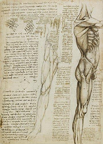 World of Art Global Vintage Anatomie Leonardo da Vinci Die Muskeln des Beins, Italien, 14-15 Jahrhundert. 250 g/m², glänzend, Kunstdruck, A3, Reproduktion