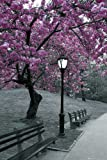 New York - Central Park - Blossom Blumen Pflanzen Poster