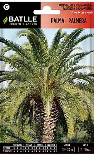 Semillas de Flores - Palma-Palmera - Batlle