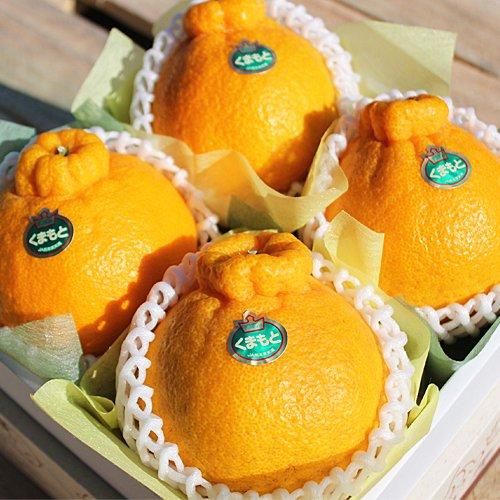 【産地直送】熊本県産 高級 デコポン 化粧箱入り 熊本が誇る至極の柑橘、本物のデコポン!! (小 ( 4玉 箱込 1.2kg前後 ))