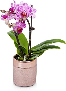 Just Add Ice JAI207 Mini Orchid, Unique