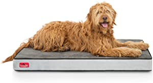 Best Hypoallergenic Dog Beds