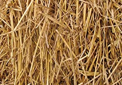 Thunder Acres Natural Wheat Straw