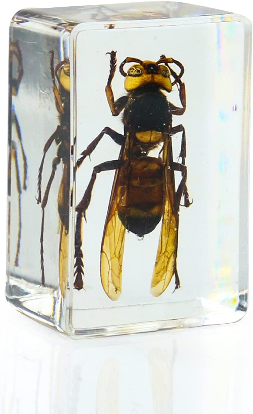 Low price 3D Amber Tiger Bee Crystal Figurine Collections Sta Decorations 35% OFF