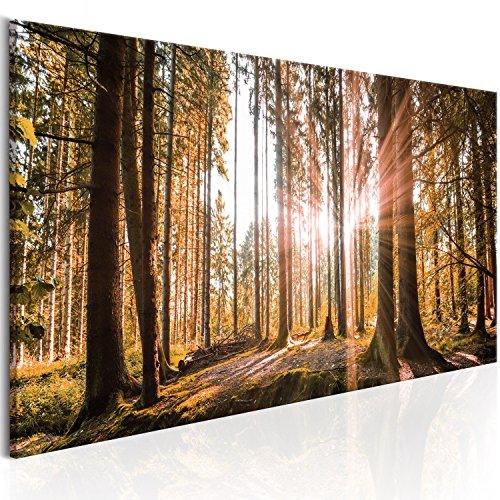 murando - Bilder Wald 135x45 cm Vlies Leinwandbild 1 TLG Kunstdruck modern Wandbilder XXL Wanddekoration Design Wand Bild - Waldlandschaft Natur Panorama Baum c-B-0077-b-d