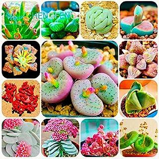 300 / bolsa de mezcla suculentas semillas de loto Lithops Pseudotruncatella Bonsai Plantas Semillas para la mezcla de la flor Hogar y Jardín Macetas Macetas Semillas