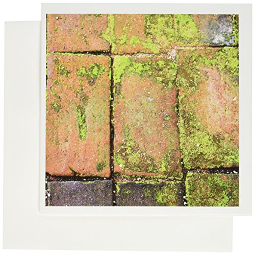 3dRose Set of 12 Greeting Cards, Old Red Bricks Walkway with Green Moss (gc_159790_2)