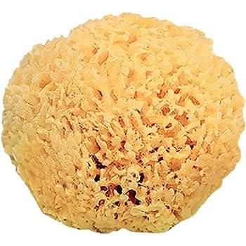 Esponja natural del Mediterr/áneo en caja Dnins 4020