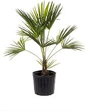 Best 3 gallon plant size Reviews