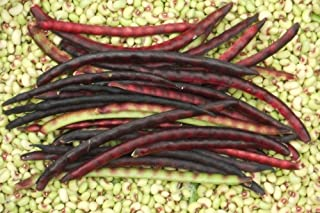 ANVIN Seeds Package: Germination Seeds PLATFIRM-Mississippi Pinkeye 2 Purple Hull Pea Cowpea Vegetable - 25 Seeds
