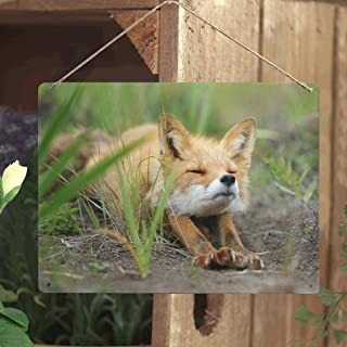 Custom Cute Fennec Fox New Wall Art Printing Metal TIN Sign Decor for Living Rooms,Offices Wall Decoration 16