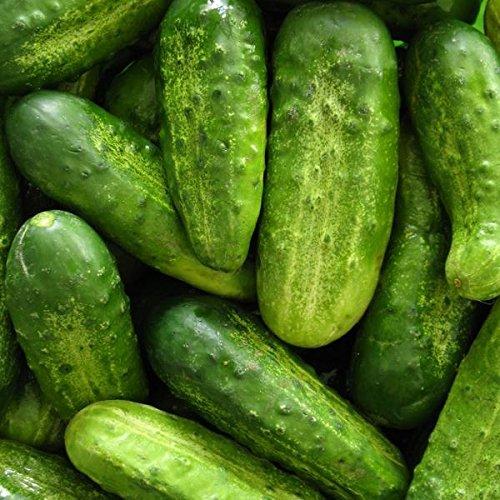 Homemade Pickling Cucumber Seeds