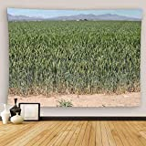 Uoopati Kansas Tapestry Wall Hanging Landscape Close View of Large Farm Field Green Crop Wheat Ears Before Wall Art Tapestries Tapestry for Bedroom Room Decor Picnic Mat Beach Bed Cover 28'x37'