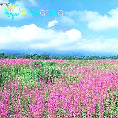 200 PCS / sac français graines provence lavande très parfumées graines de fleurs biologiques jardin Vous Bonsai