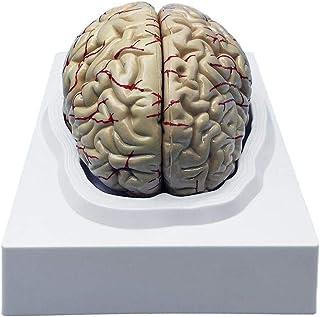 4.7 * 3.1 * 3.1inch No Incluso LED Base LUCKFY Cervello Umano Modello 3D cubo di Vetro fermacarte Mestieri di Cristallo per i Regali di Scienze della Formazione di Compleanno//Laurea