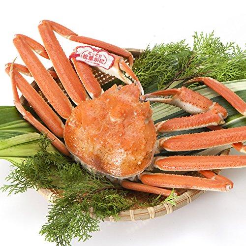 日本海市場 タグ付き特上松葉ガニ(ズワイガニ) 小サイズ1枚(茹で400g前後)「本物」の松葉ガニを産地直送でお届けします