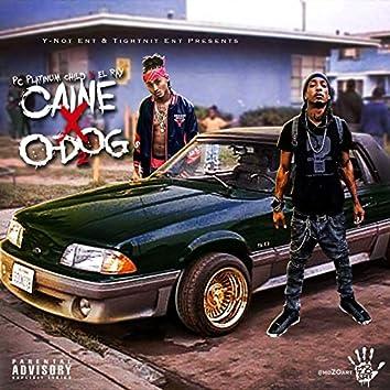 Caine X O-Dog II