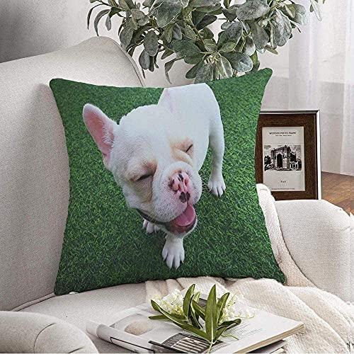 Funda de Fundas de Almohada Cozy White Pedigree Brown Baby on French Bulldog Dog Cute Little Cachorro Animales de pie Mamíferos Vida Silvestre Throw Pillow Cojín Funda de cojín para sofá Decoración d