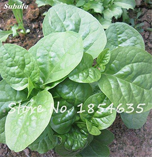 Promotions Légumes chinois Malabar épinards graines santé frais Green Food Bonsai pot plantes ornementales 120 Pcs Vente chaude