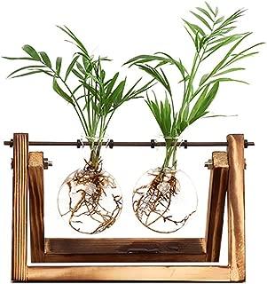 Best good plants for office desk Reviews