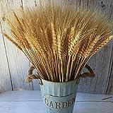 PerfiCap Wheat Stalks, 100Pcs...