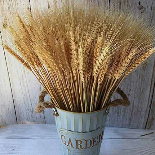 Wheat Stalks, 100Pcs Natural Ear of Wheat Grain Flowers for Home Dining Table Arrangement Flower Art Wedding Decoration
