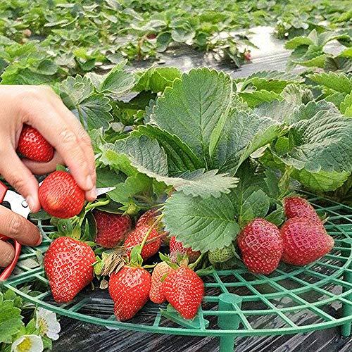 Comius Sharp Erdbeer Reifer, 10 Stücke Erdbeer Halter Rankhilfe Erdbeerschutz Unterstützt,Erdbeerreifer,Fruchtreifer,Schneckenschutz und Schutz vor Fäulnis und Schimmel