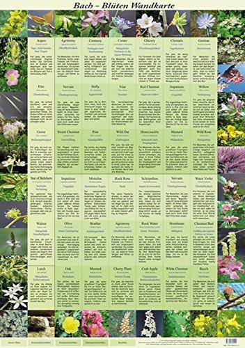 Bach Blüten Wandkarte