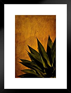 Poster Foundry Agave On Adobe Sunset by Chris Lord Photo Art Print Matted Framed Wall Art 20x26 inch